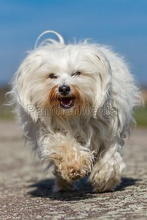 froehlicher hund
