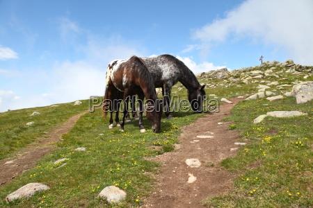 holiday vacation holidays vacations horse dolomites