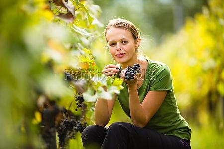 schoene frau im weinberg trauben pfluecken