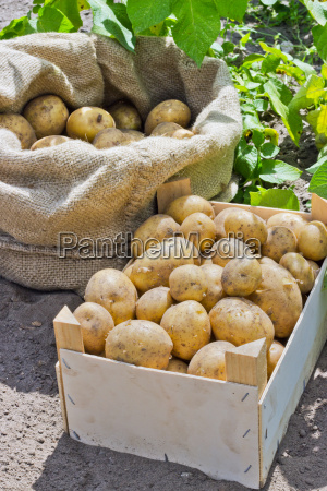 bag box wooden box vegetables fresh