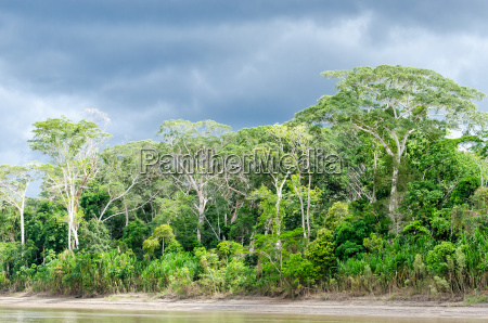 national park virgin forest jungle nature