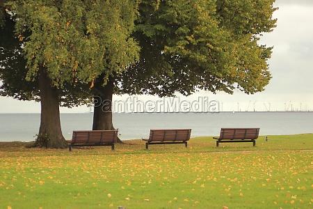 blau blatt baumblatt baum horizont park