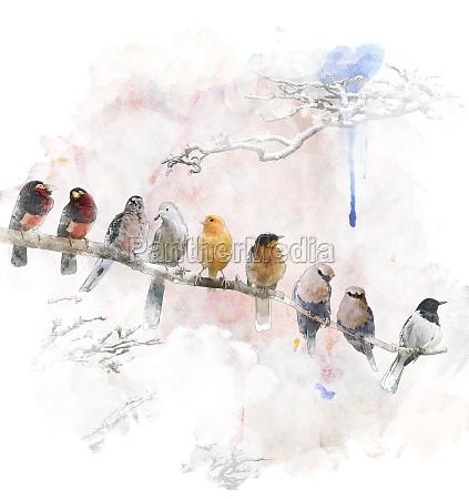 aquarell bild von hockenden voegel