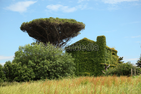 country house fully covered with ivy
