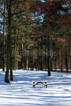 romantic winter forest