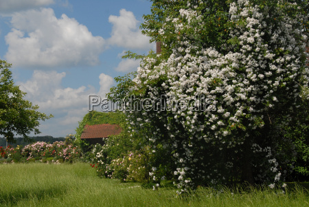 agriculture farming summer summerly roses farmhouse