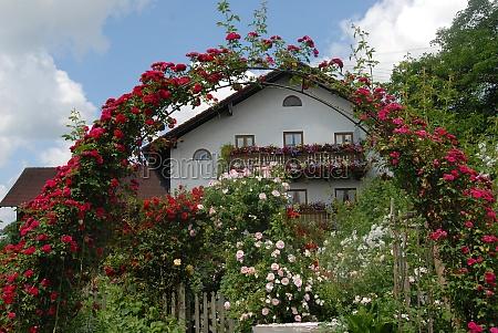 garden flower flowers plant roses farmhouse