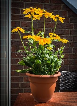 sun hat in the flowerpot