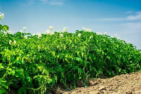 blume pflanze gewaechs landwirtschaft ackerbau feld
