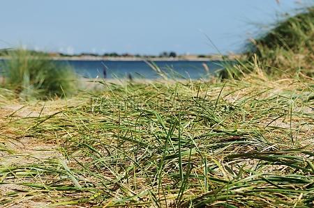duenen strand meer fehmarn