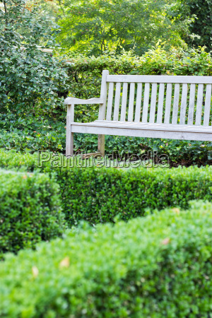 wooden bench bench wood boxwood tree