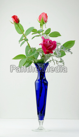 pink roses with a blue vase
