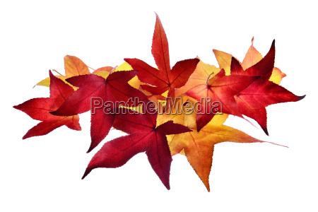 arrangement of autumn leaves