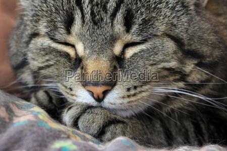 eine schlafende katze