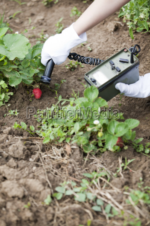 hand haende frucht obst erdbeere besitz