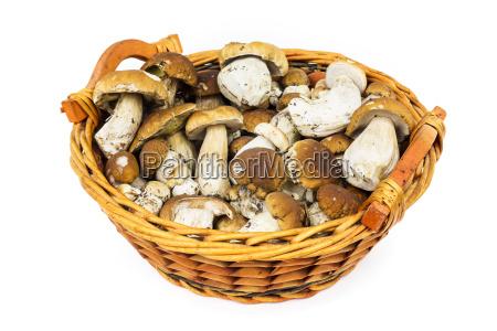 stone mushroom in the basket