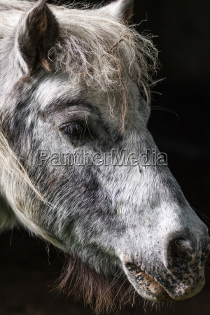 pony porty
