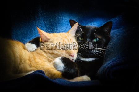 katzen freundschaft