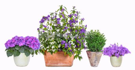 different flower pots