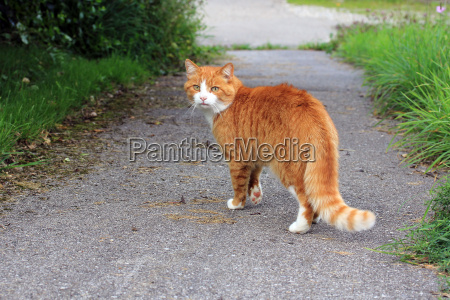 the red cat on the street