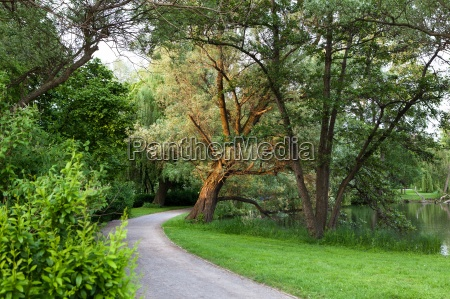 beautiful road in the park