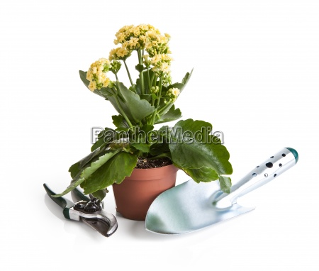 close up of potted plant and