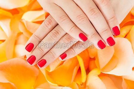 female hand holding flowers