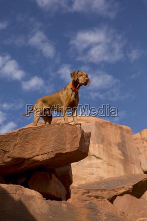 hund auf der spitze der klippe