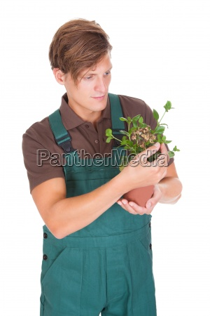 male gardener holding potted plant