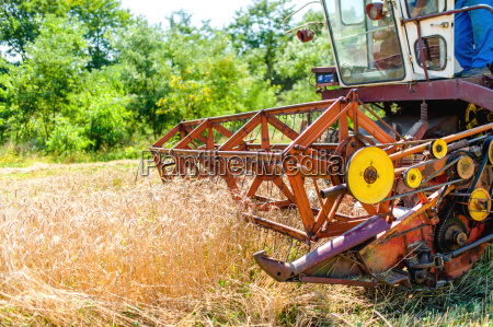process of harvesting with combine gathering