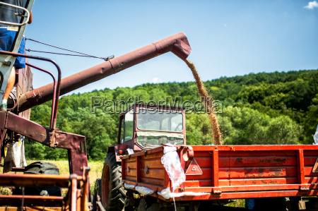 industrial combine harvester unloading wheat crops