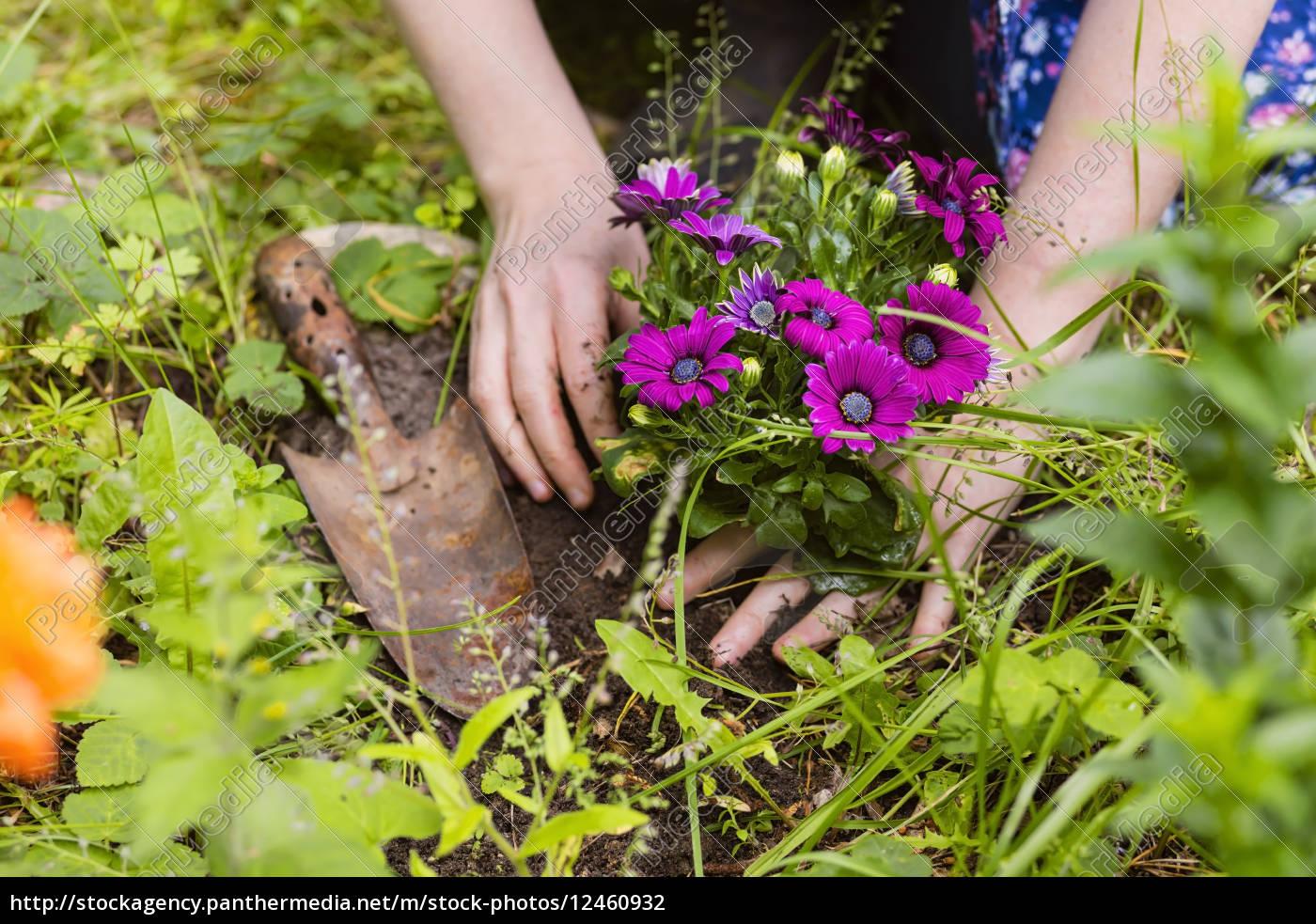 blumen pflanzen - lizenzfreies foto - #12460932 - bildagentur
