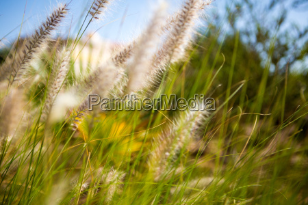 blatt baumblatt farbe baum park garten