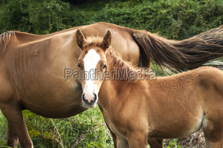 foal and mare amid green vegetation
