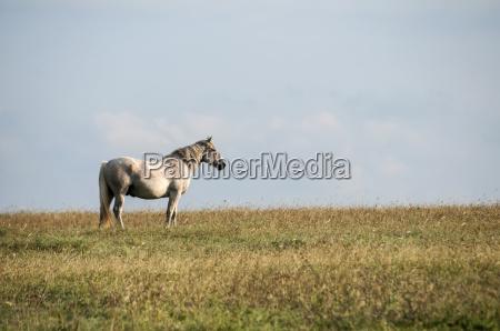 pferd ross tier saeugetier hengst gepunktet
