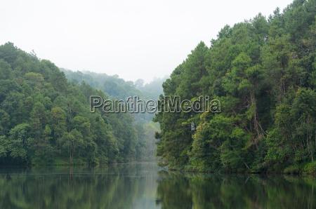 kiefer fruehe pinie landschaftsbild landschaft natur