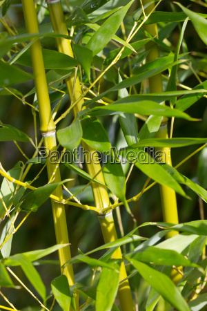 bamboo bamboo branches branch plant green