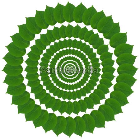 blatt baumblatt blaetter verzierung kreis ornament