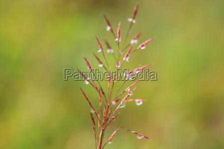 wasser tropft auf dem gruenen gras
