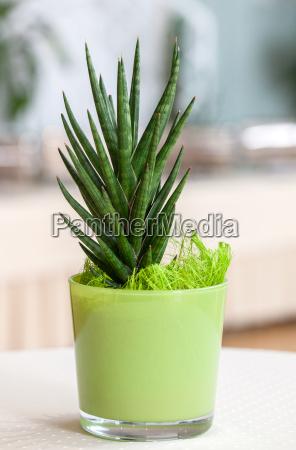 kleine zimmerpflanze im hellgruenen blumentopf