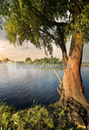 willow auf dem fluss