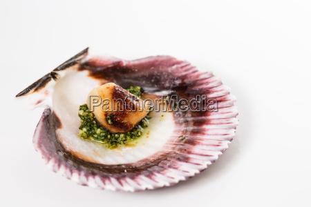 studio closeup of seared scallops
