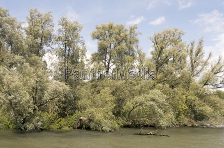 baum baeume nationalpark fluesschen