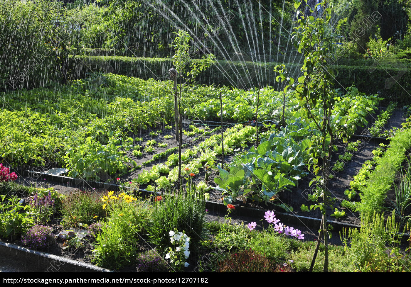 natur wasser garten obst pflanzen gem se frucht kr uter stock photo 12707182 bildagentur. Black Bedroom Furniture Sets. Home Design Ideas