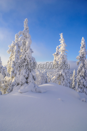baum baeume winter sonnenuntergang verschneit abendrot