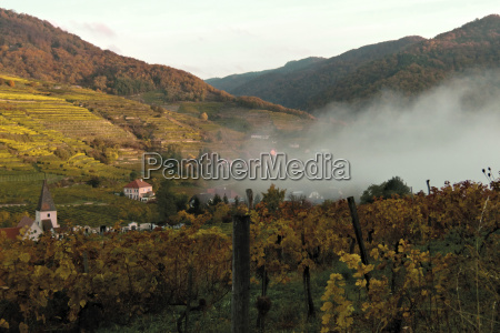 vineyard in wachau