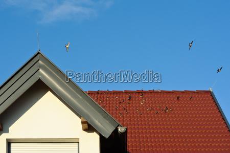 schwalben auf dem dach eines hauses