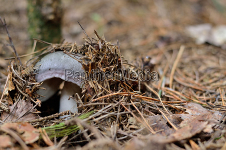 mushroom sprouting from the forest floor