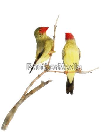 kunst tier haustier vogel gemaelde kuscheltier