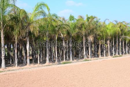 palmen palmenblAEtter in spanien